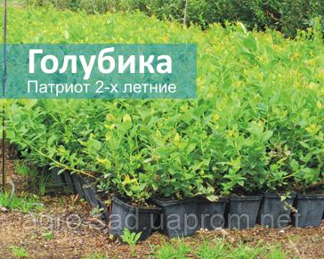 Мелитопольский питомник саженцев сайт жимолостьи калина купить отзыв о хостинговой компании infobox
