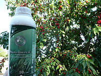 Бор благоприятствует опылению, фосфор усиливает корневое питание, калий повышает сахаристость и привлекательность плодов, готовит побеги к перезимовке.