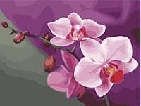 """Рисование по номерам на холсте """"Розовые орихидеи"""" 40*50 см. Идейка"""