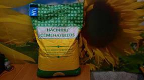 Семена подсолнечника Барса под Гранстар (Палента Технолоджи, Аргентина) устойчив к заризихе (А-F)