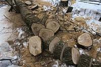 Спил, обрезка деревьев, выкорчёвка пней.