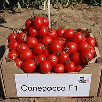 Томат Солероссо F1  детерминантный урожайный гибрид с плодами красного цвета предназначен для консервации