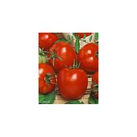 Агитатор F1 семена томата (Гавриш, Россия)