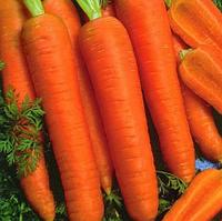 КАНАДА F1 насіння моркви Шантане (1,6-1,8 мм) PR
