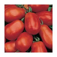 Бенито F1 семена томата (Bejo, Нидерланды)