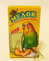 Мелок для волнистых попугаев с морскими ракушками