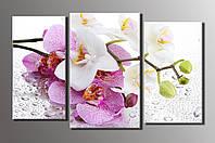 """Модульная картина на холсте из 3-х частей """"Орхидеи на стекле"""""""