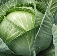 ХАРРИКЕЙН F1 - семена капусты белокочанной, 2 500 семян, Bejo Zaden, фото 1