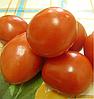 БЕНИТО F1 - семена томата детерминатного,  5 грамм, Bejo Zaden