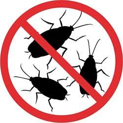 Как избавиться от тараканов быстро и надолго?
