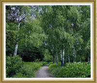 Фотообои, Берёзовая аллея, 15 листов, размер 201х242см