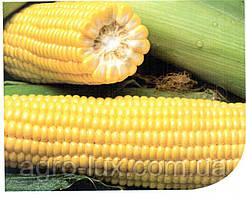 Семена кукурузы Харди F1 5000 шт Hazera / Хазера