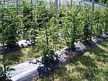 Агроткань AGROJUTEX (Чехия)