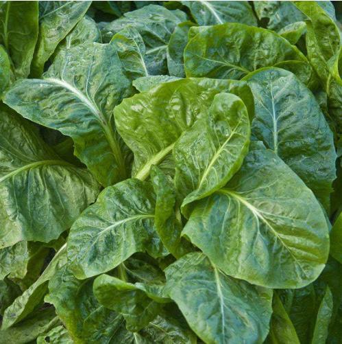 отзывы о удобрении агромакс