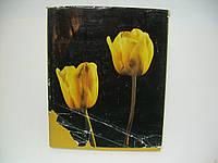 Цветы (б/у)., фото 1