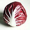 ИНДИГО - семена цикория кочанного фиолетового 5 000 семян, Bejo Zaden