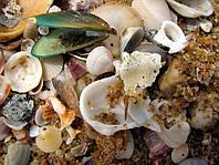 Кормовая ракушка дробленная, морская и речная до 40% кальция