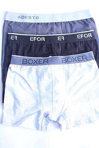 Мужские боксеры M  Турция, фото 2