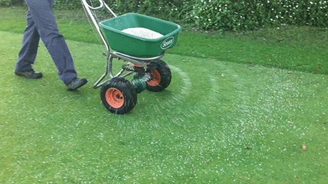 Добриво для газону: коли ж годувати газон і чим