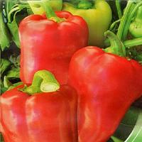 Хан Гирей F1 семена перца сладкого (Элитный Ряд, Молдавия)