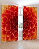 Фотошторы хризантема красная макро съемка