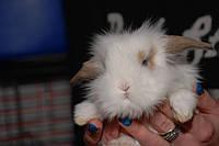 Маленький пушистый кролик - лучший подарок для любимых девушки на 8 марта