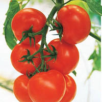 Томат Кристалл F1 семена раннего высокорослого гибрида томата, сорту не страшны заболевания (10 с. в пакете)