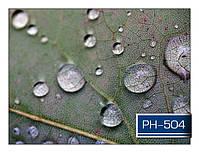 ph_504.jpg