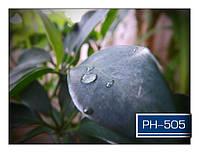 ph_505.jpg