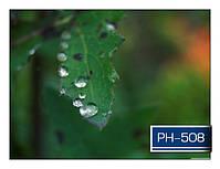 ph_508.jpg