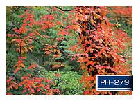 ph_279.jpg