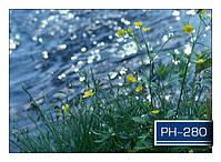 ph_280.jpg