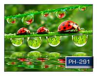 ph_291.jpg