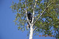 Спил деревьев в Харькове