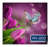 ph_203.jpg