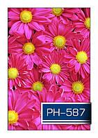 ph_587.jpg