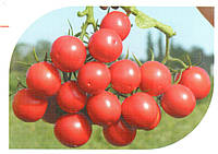 Семена красного томата Руфус F1 1000 шт, Esasem