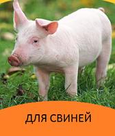 Корма и добавки для свиней и поросят