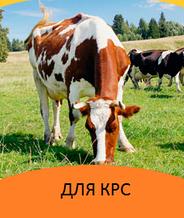 Корма для КРС (коров, телят)