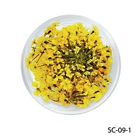 Желтые сухоцветы «зонтики». SC-09-1