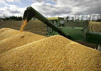 В прошлом году Россия повысила сбор пшеницы