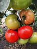 Томат Florida 47 F1 Seminis 1000 семян