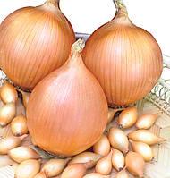 Лук- севок озимый Стурон 10 кг TOP Onion