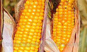 Гран 310 семена кукурузы ВНИС