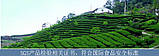 Китайський молочний Улун чай, Тайвань, 250g, фото 6