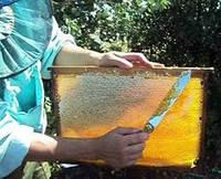 Продам  мёд кориандра