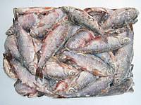 Продаём свежемороженую речную рыбу оптом