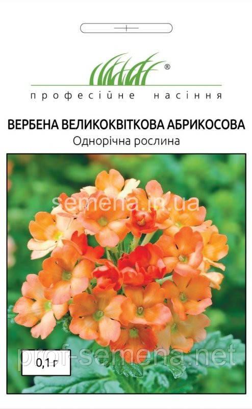 Вербена абрикосова 0,1 г
