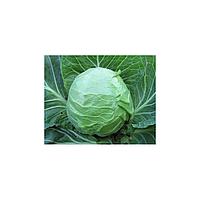 Акира F1 семена капусты белокочанной (Kitano Seeds, Япония)