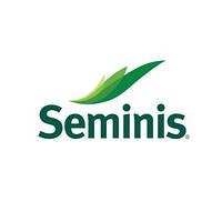 Арривист F1 семена капусты белокочанной (Seminis, Нидерланды)